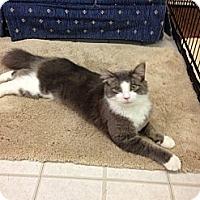 Adopt A Pet :: Murray - Aiken, SC