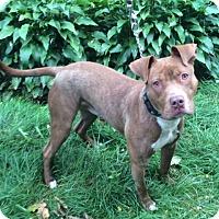 Adopt A Pet :: RJ - Chicago, IL
