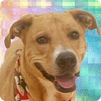 Adopt A Pet :: Miley - Cincinnati, OH