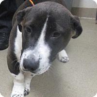 Adopt A Pet :: John Boyega - Jersey City, NJ