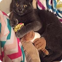 Adopt A Pet :: Stormy - Piscataway, NJ