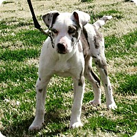 Adopt A Pet :: Candy - Broken Arrow, OK