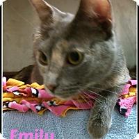 Adopt A Pet :: emily - Muskegon, MI