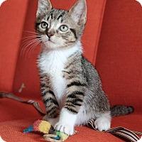 Adopt A Pet :: Abe - Brooklyn, NY
