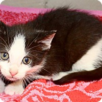 Adopt A Pet :: Nathaniel - Fairborn, OH