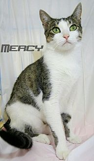 Domestic Shorthair Cat for adoption in Baton Rouge, Louisiana - Mercy