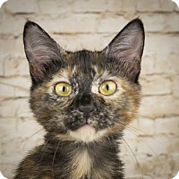 Adopt A Pet :: Libra - Columbia, IL