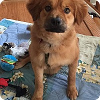 Adopt A Pet :: Kylie - Potomac, MD