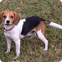 Adopt A Pet :: Stanley - Fairfax, VA