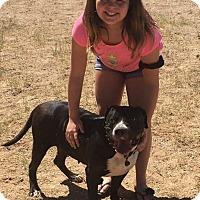 Adopt A Pet :: Princess Nena - Wickenburg, AZ