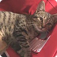 Adopt A Pet :: RUBY - McArthur, OH
