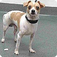 Adopt A Pet :: Larry - Lomita, CA