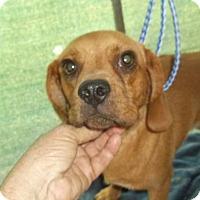 Adopt A Pet :: Ruby Mae - Bonifay, FL