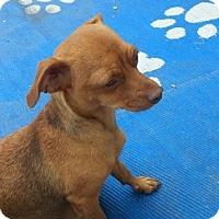 Adopt A Pet :: MaMa LINDA - Englewood, CO
