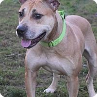 Pit Bull Terrier Mix Dog for adoption in Valparaiso, Indiana - Kanga