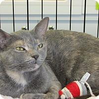 Adopt A Pet :: Calli - Richmond, VA