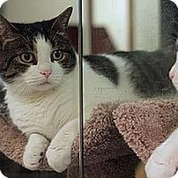 Adopt A Pet :: Petey - Columbia, MD
