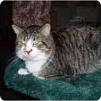 Adopt A Pet :: Tiger - Hamburg, NY