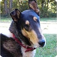 Adopt A Pet :: Static - Mocksville, NC