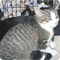 Adopt A Pet :: Zelda - Colmar, PA