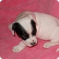 Adopt A Pet :: Jingles - Wilmette, IL
