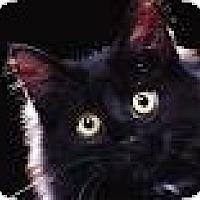 Adopt A Pet :: Midnight - Whitestone, NY