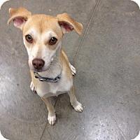 Adopt A Pet :: Kimi - Phoenix, AZ
