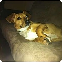 Adopt A Pet :: Ava - Arlington, TX