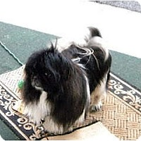 Adopt A Pet :: Tinsley - Virginia Beach, VA
