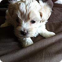 Adopt A Pet :: Sarah - Northumberland, ON