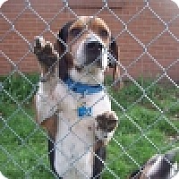 Adopt A Pet :: Joey - Novi, MI