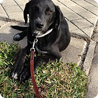 Adopt A Pet :: Sidney - Lewisville, IN