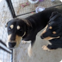 Adopt A Pet :: Buddy - Chewelah, WA