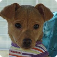 Adopt A Pet :: Belle - Turlock, CA