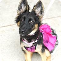 Adopt A Pet :: Vinnie - Detroit, MI