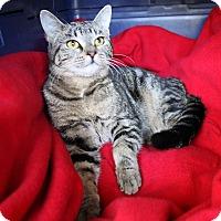 Adopt A Pet :: DAINA - Newport Beach, CA