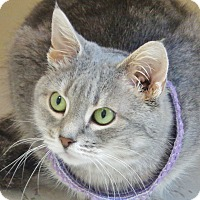 Adopt A Pet :: Miss Biscuit - Chambersburg, PA