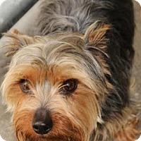 Adopt A Pet :: Harold - Chester Springs, PA