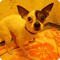Adopt A Pet :: *BELLA - Upper Marlboro, MD
