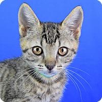Adopt A Pet :: CoCo - Carencro, LA