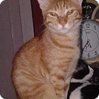 Adopt A Pet :: Nefertiti and Cleopatra - Marion, CT