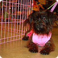 Adopt A Pet :: Mandy - Fort Myers, FL