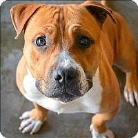 Adopt A Pet :: Bubba - Vallejo, CA