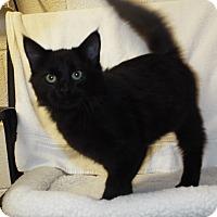 Adopt A Pet :: Nitro - Shelby, MI