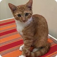 Adopt A Pet :: Miley - Peace Dale, RI