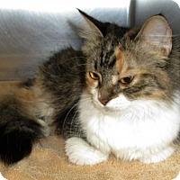 Adopt A Pet :: Molly Sue - Covington, VA