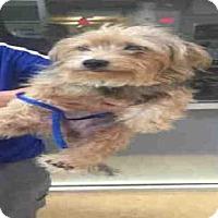 Adopt A Pet :: LIL MAMMA - Plano, TX