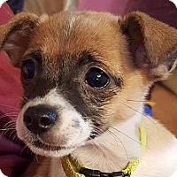 Adopt A Pet :: Tallie - Bedminster, NJ