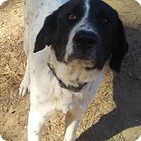 Adopt A Pet :: Jack - Attalla, AL