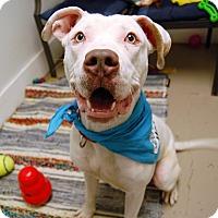 Adopt A Pet :: Frosty - Wilmington, DE